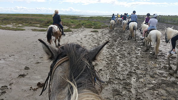 between the ears view horseback riding on the beach in camargue france