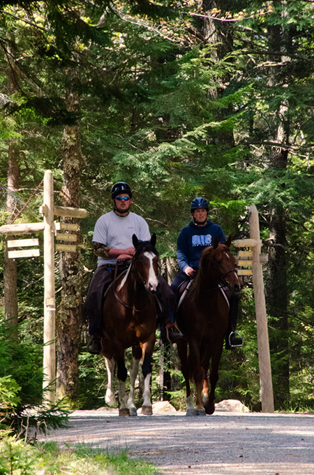 couple riding horses in acadia national park