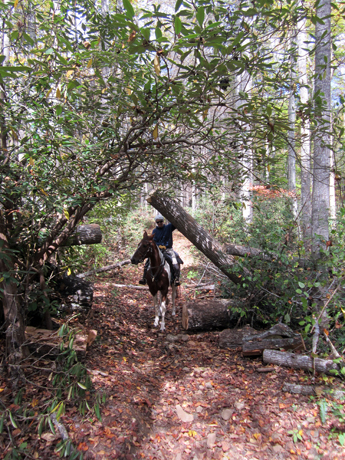 pisgah national forest horseback riding trail riding