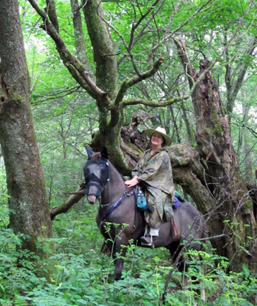 tennessee horseback riding cherokee national forest