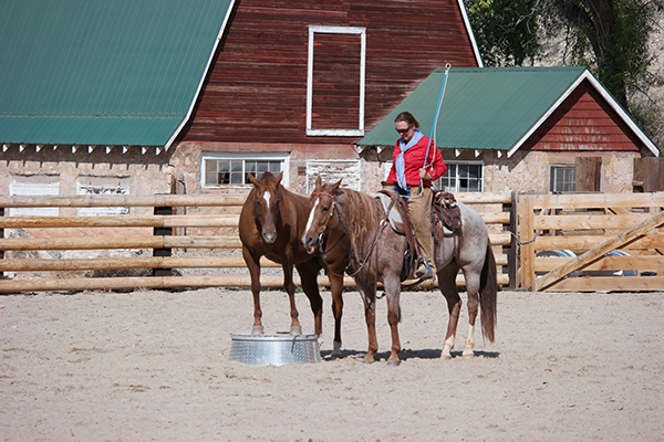 Trapper Creek Ranch Wyoming horsemanship clinics