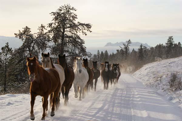 tsylos park lodge british columbia horseback riding vacations