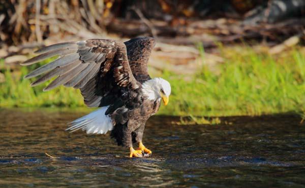 tsylos Park lodge wildlife british columbia, canada