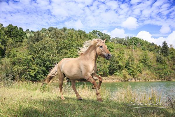tuscany horses italy