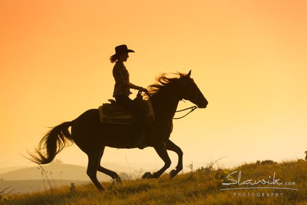 Tuscany horses at sunset