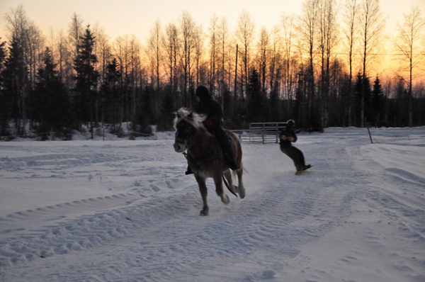 Skijoring Lessons in Finland