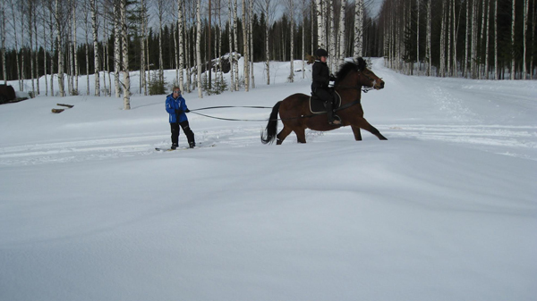 Pisan Erarastut Finland Skijoring