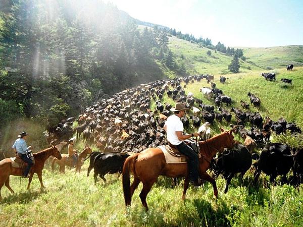 TX Ranch Cattle Drive