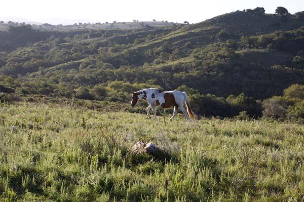 Uruguay countryside
