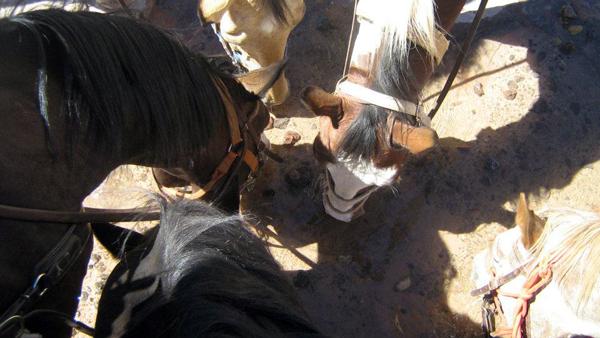 utah slickrock hondoo horses drinking