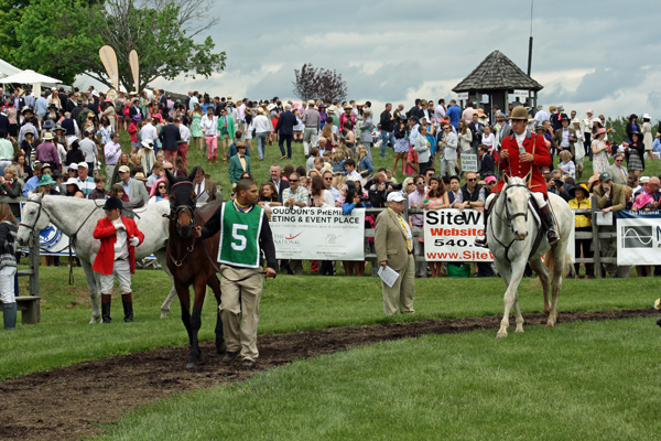 Virginia Gold Cup Horses in Paddock