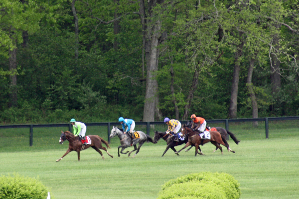 Virginia Gold Cup Race