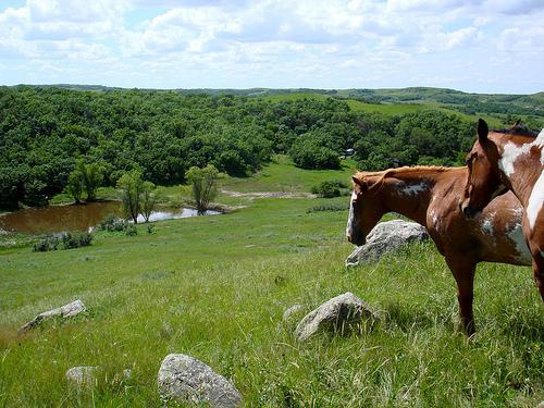 veeder ranch, nd