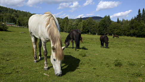 Vermont Icelandic Horse Farm Mad River Inn equestrian vacations