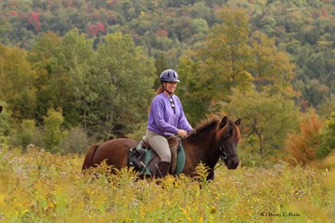 vermont icelandic horse farm fall colors