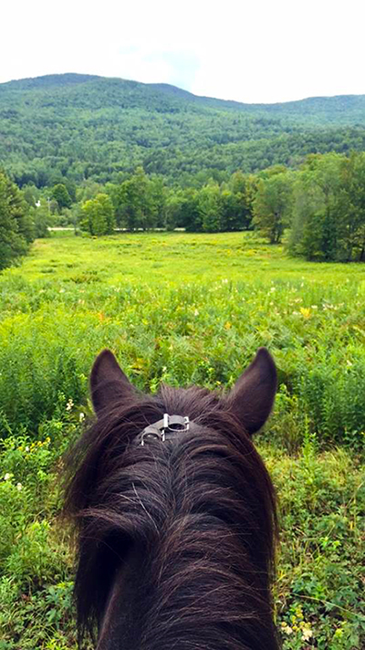 Vermont Green Mountains Icelandic Horses