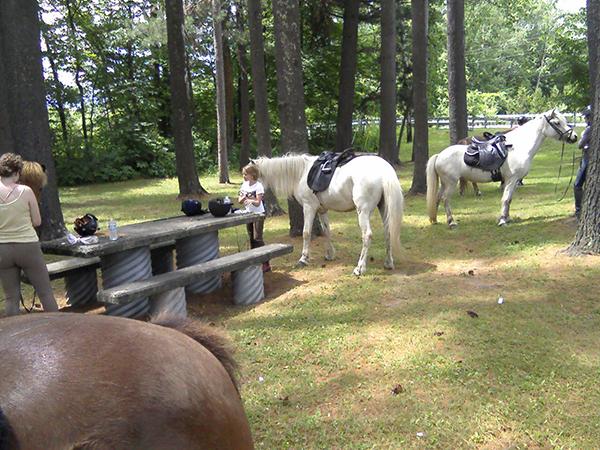 Vermont Icelandic Horse Farm Equitrekking