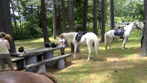 Vermont Icelandic Horse Farm riding vacations