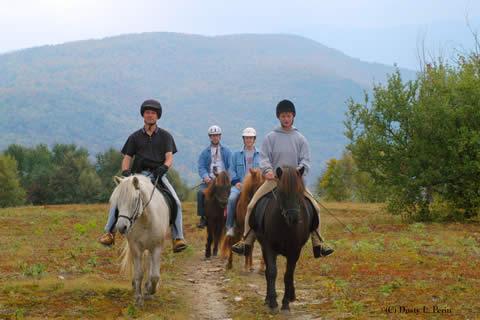 vermont icelandic horse farm horseback