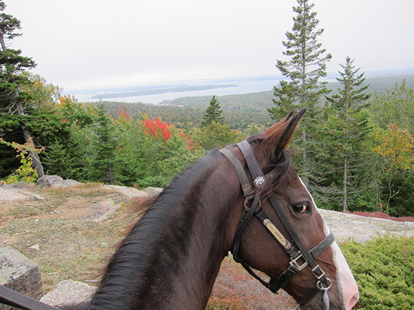 view of acadia national park from horseback