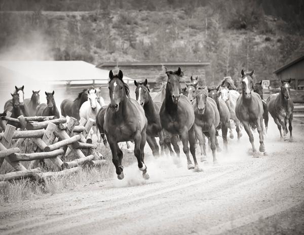 vista verde guest ranch horse stampede
