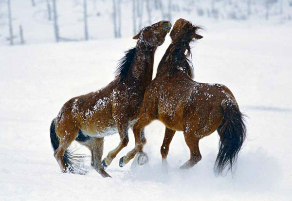 Vista Verde Guest Ranch horses in snow