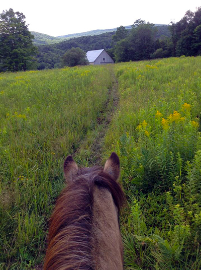 Vermont Icelandic Horse Farm barn and horses