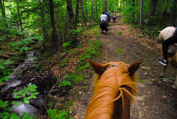 Vermont Icelandic Horse Farm woods