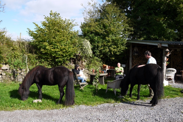 wales gower horseback riding vacations