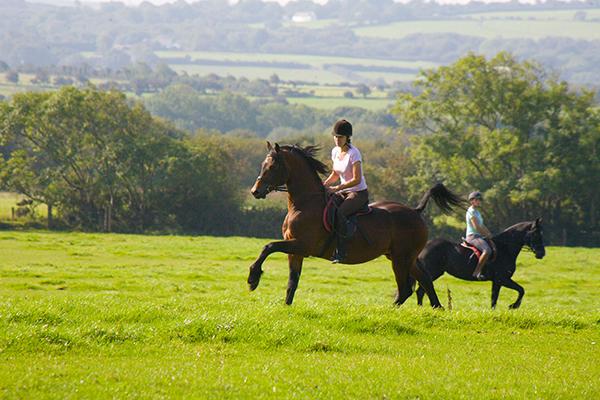 Wales stud farm