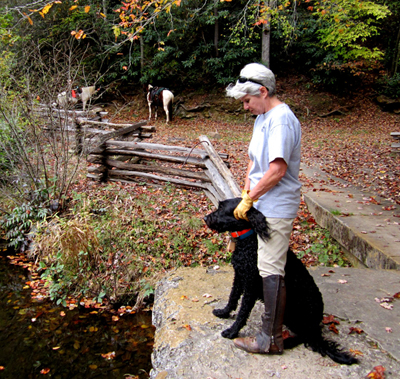 N Mills River Trail, horse in the background pisgah north carolina