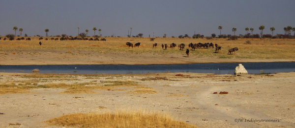 wildlife at a watering hole botswana africa