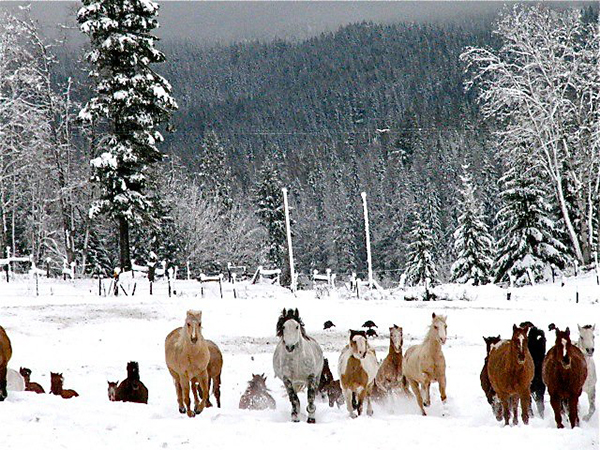 Western Pleasure Guest Ranch Winter Snow