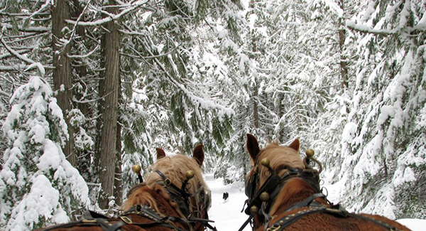 western pleasure guest ranch horse drawn sleigh ride