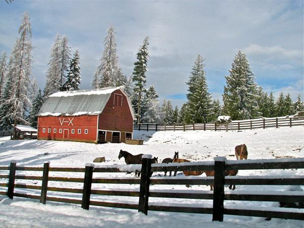 western pleasure ranch snow
