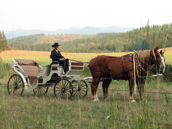 western ranch carriage horse