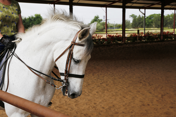 white andalusian horse epona equestrian center spain