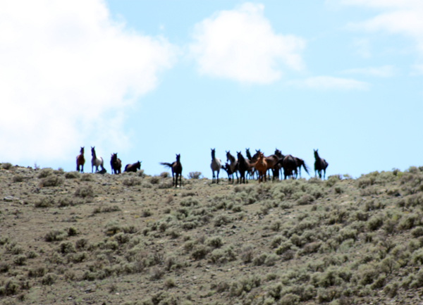 wild horse bands colorado