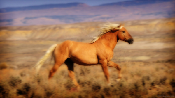wild horse running free