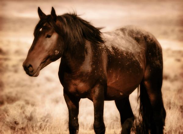wild horses america freedom