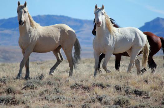 Blue Sky Sage Horseback