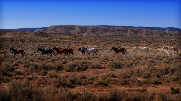 wild horses sand wash basin colorado