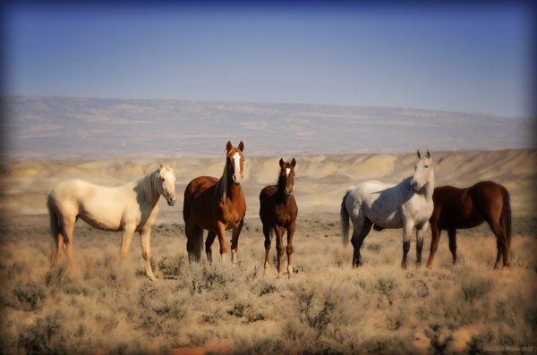 wild horses jim westin colorado