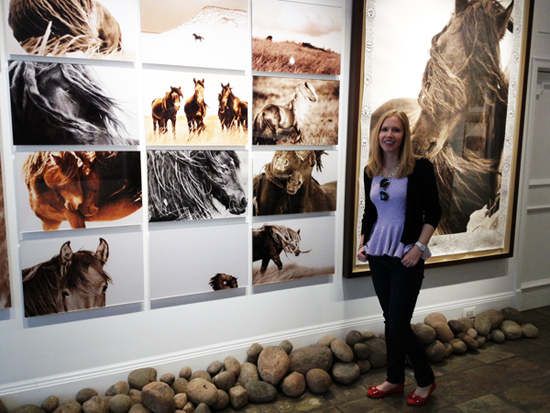 wild horses of sable island gallery darley newman