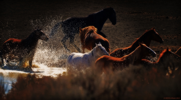 wild horses water colorado
