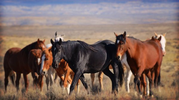 wild mustangs colorado