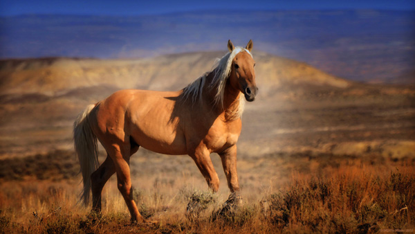 wild stallion sand wash basin colorado