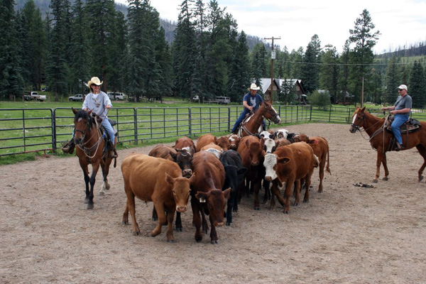 wilderness trails ranch, colorado dude ranch vacation