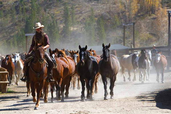wrangler moving horses at c lazy u ranch granby colorado
