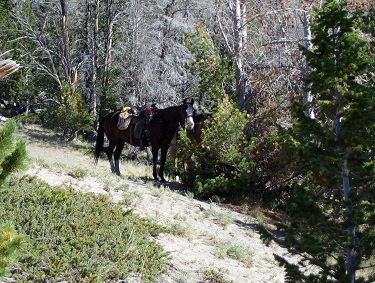 wyoming trail riding t cross